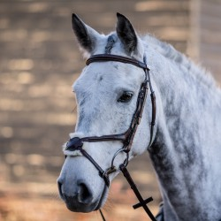 Mark Todd Performance Figure of 8 Bridle