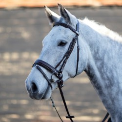 Mark Todd Padded Flash Bridle