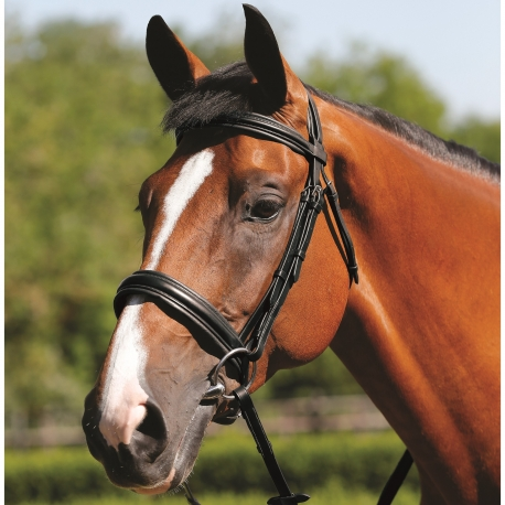 Mark Todd Padded Cavesson Bridle