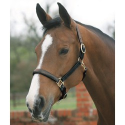 Mark Todd Leather Headcollar